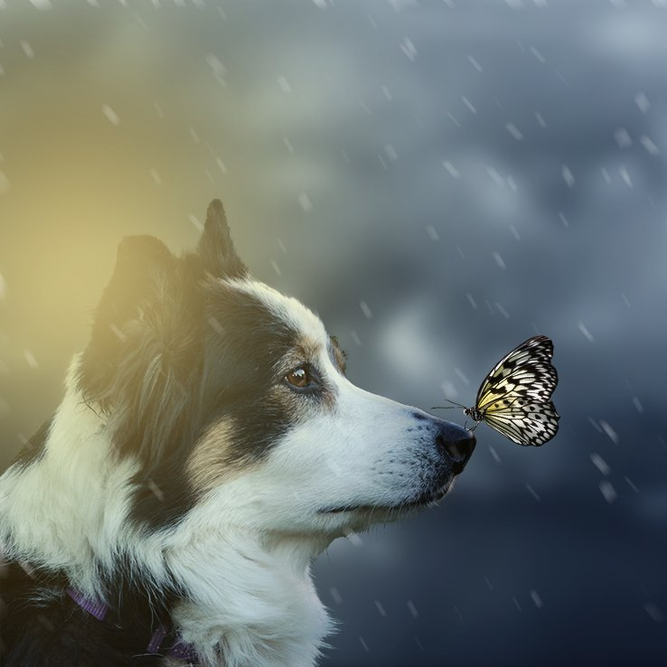 Skye and a Butterfly by salza