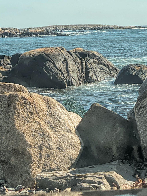 Elephant at the coast by joansmor