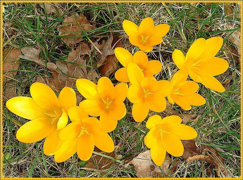 more spring flowers by gijsje