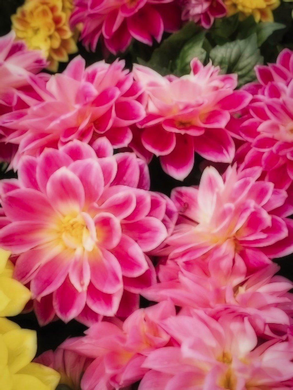 Spring Flowers  by joysfocus