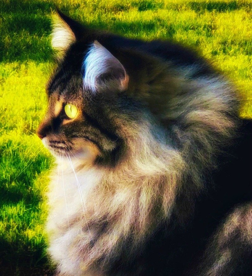 I Just Look at My Cat by gardenfolk