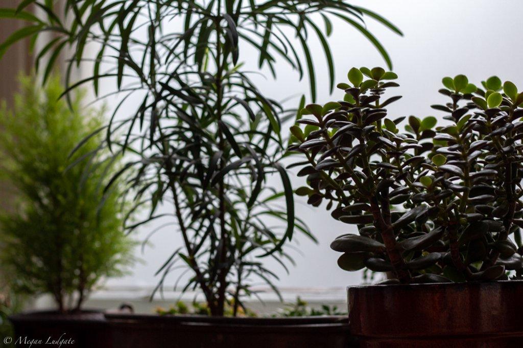 House Plants by kuva