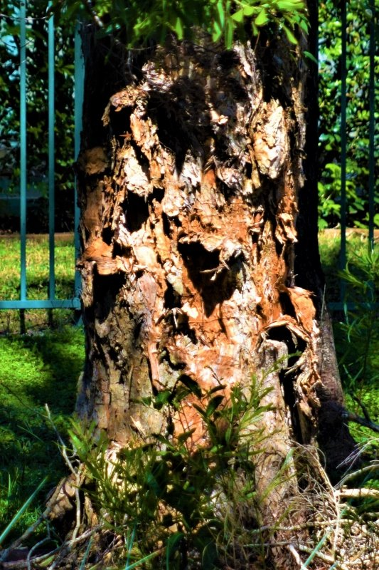 Texture &Colour in this Tree Trunk  ~     by happysnaps