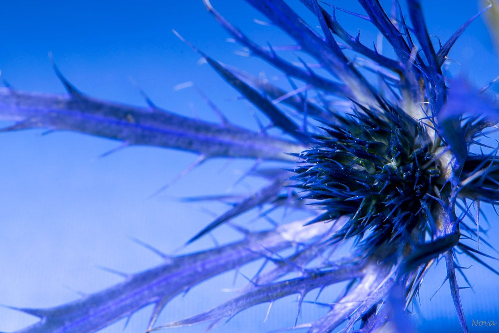 Blue #4 by novab
