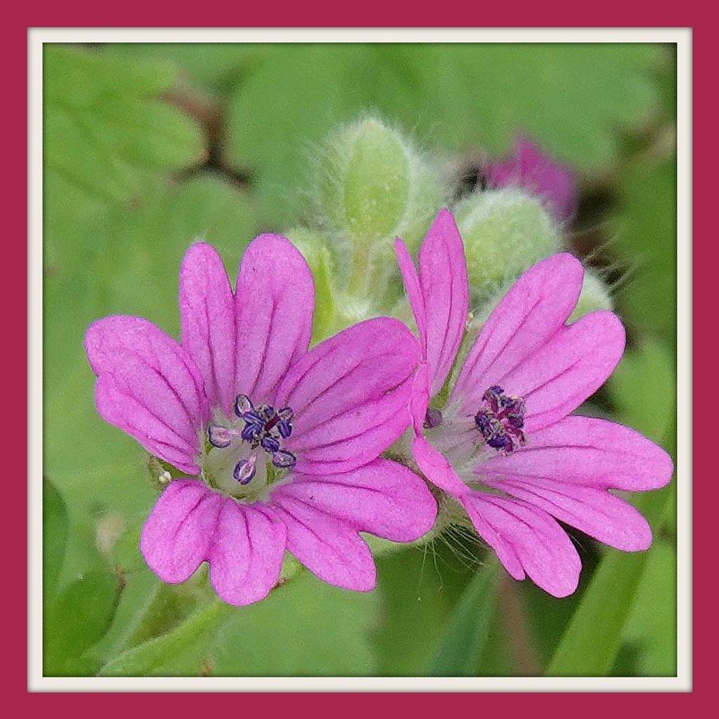 Tiny Tiny Beauties by milaniet