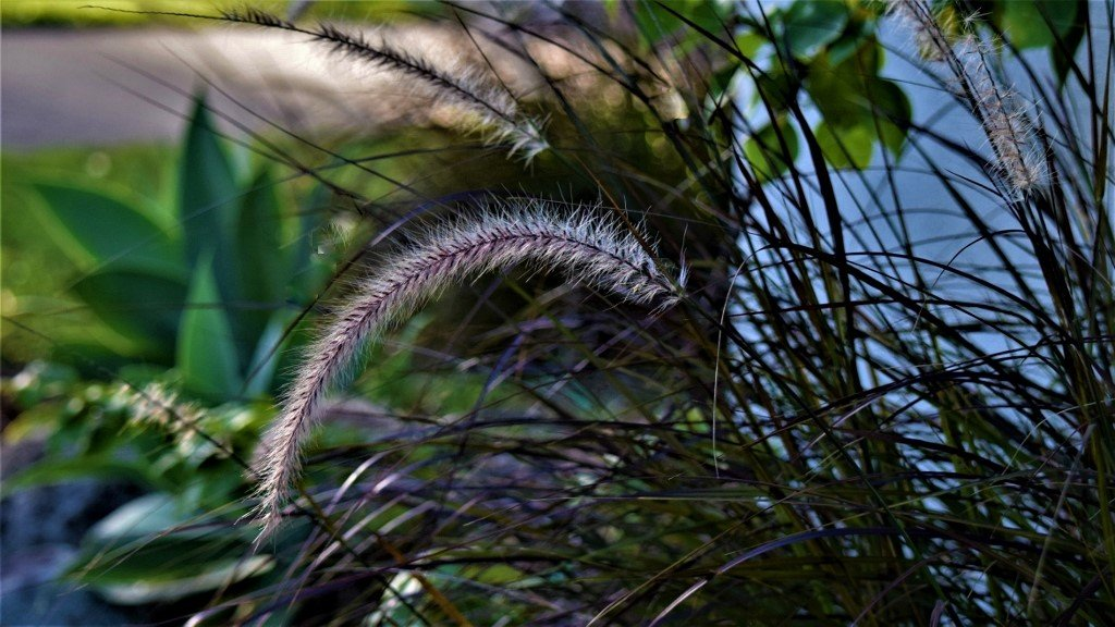 Soft Feathery Grasses ~      by happysnaps
