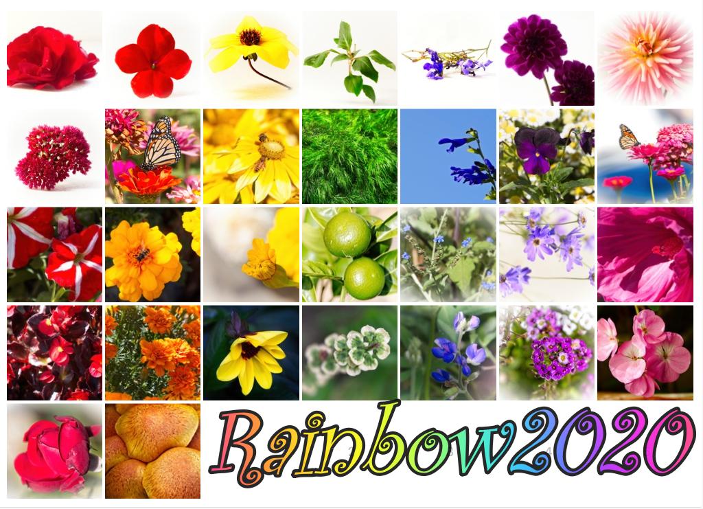 Rainbow 2020 by kiwinanna