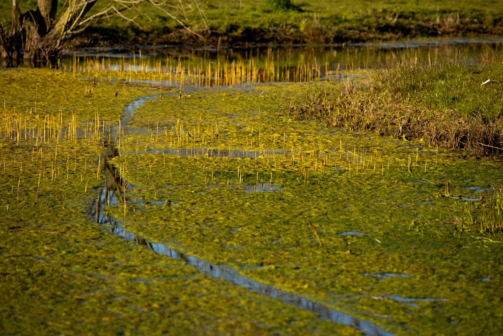 The Pond by leonbuys83