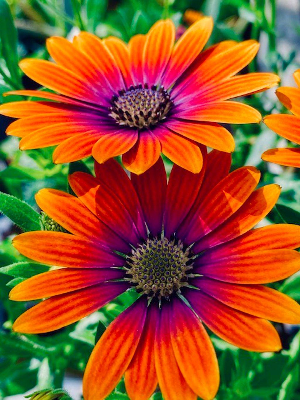 Happy Flowers by joysfocus