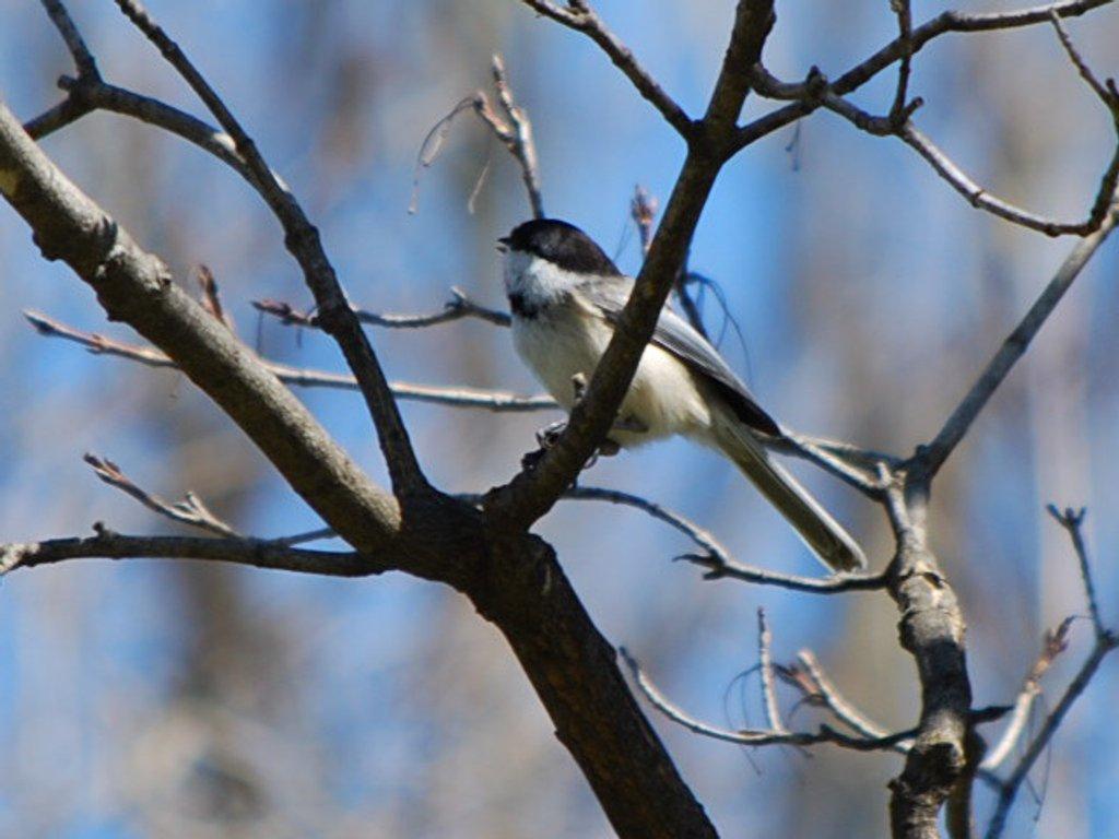 Backyard birding by stillmoments33