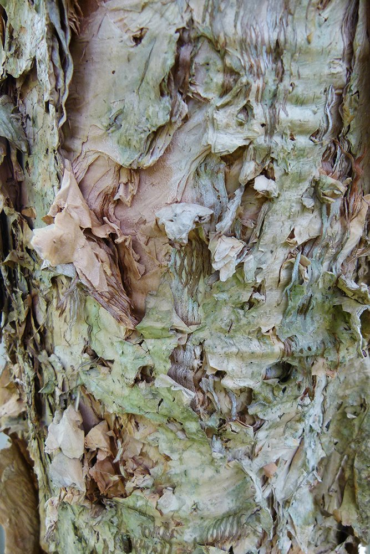 Melaleuca Bark (Paperbark) by onewing