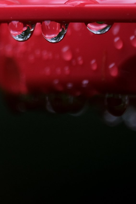Red + Drops by lsquared