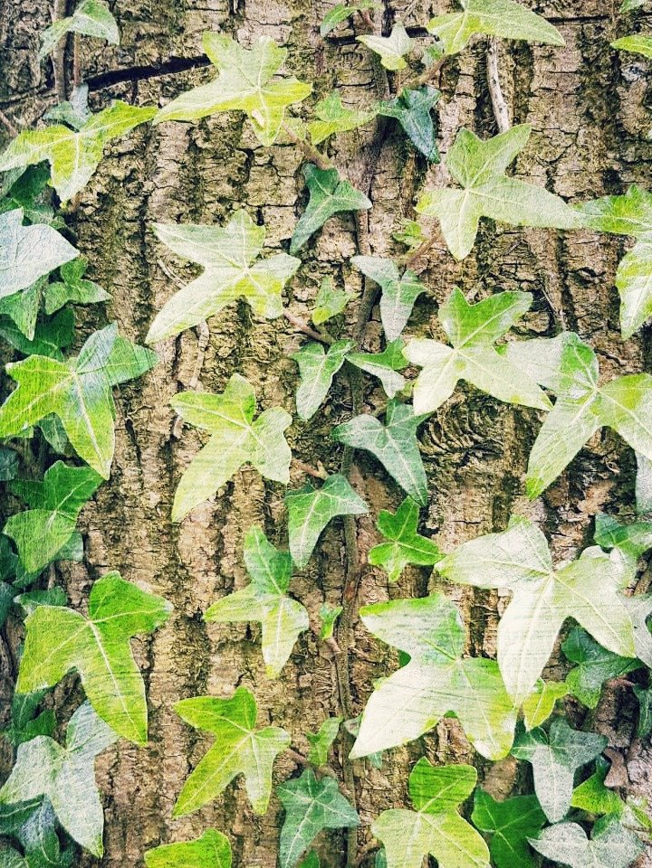 Tree by newbank