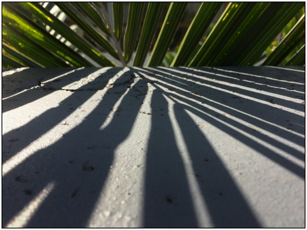 Palm Shadows by chikadnz