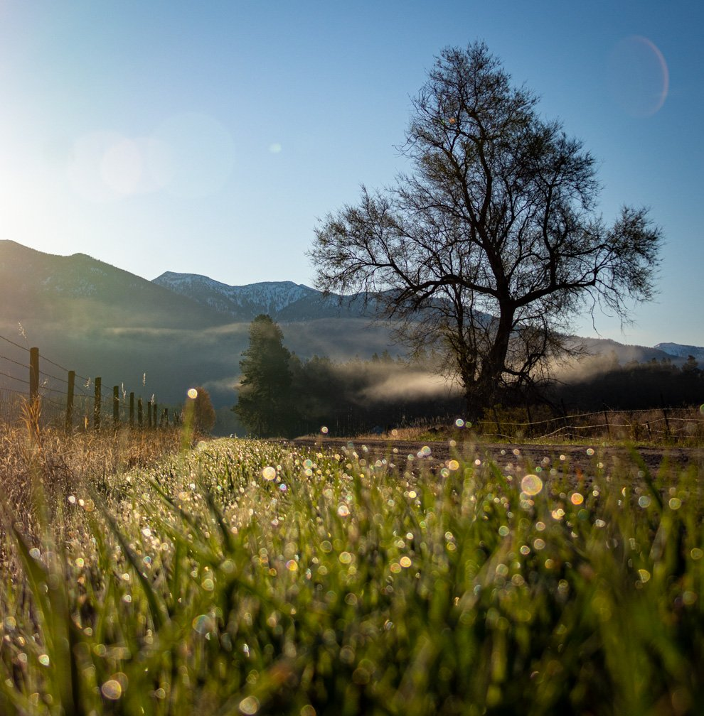 Country Morning by 365karly1