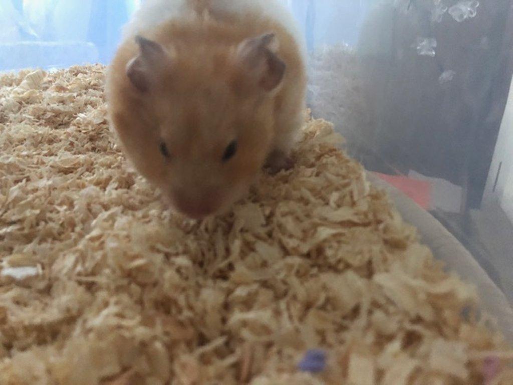 Little Hammie Hoo by nicolaeastwood
