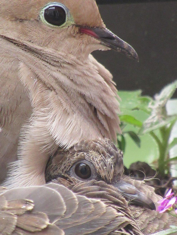 adult & squab  by granagringa