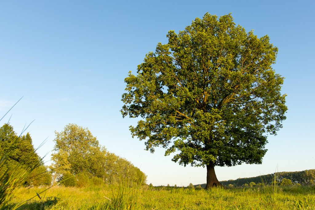 Tree in field by leonbuys83