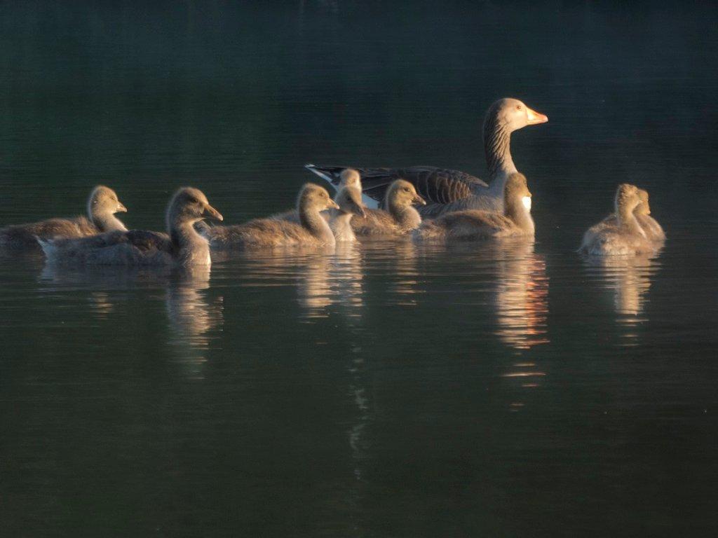 75, morning at the lake by helenhall