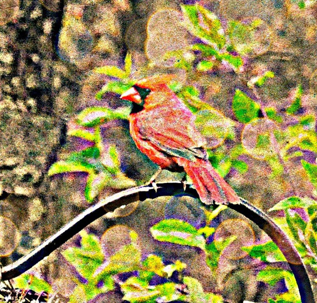 Mr. Cardinal by sailingmusic