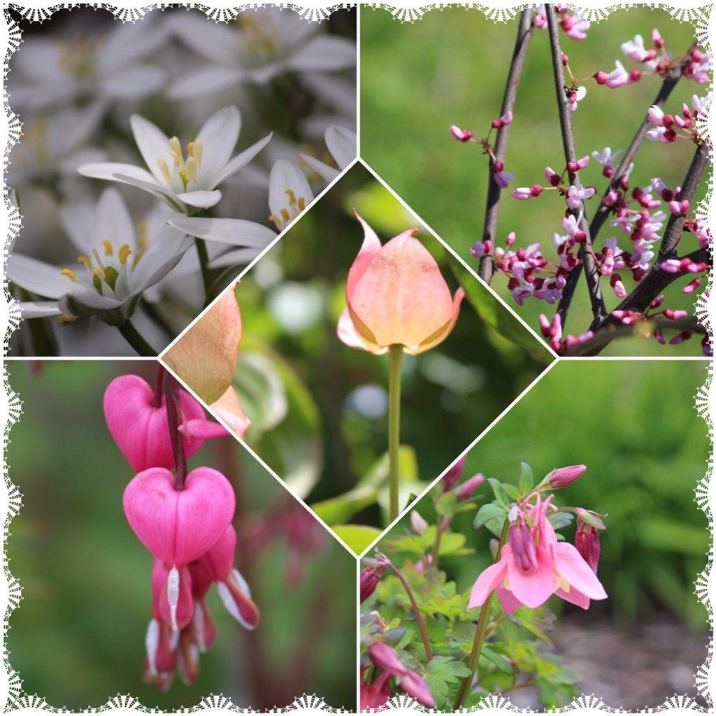 Just plants by jb030958