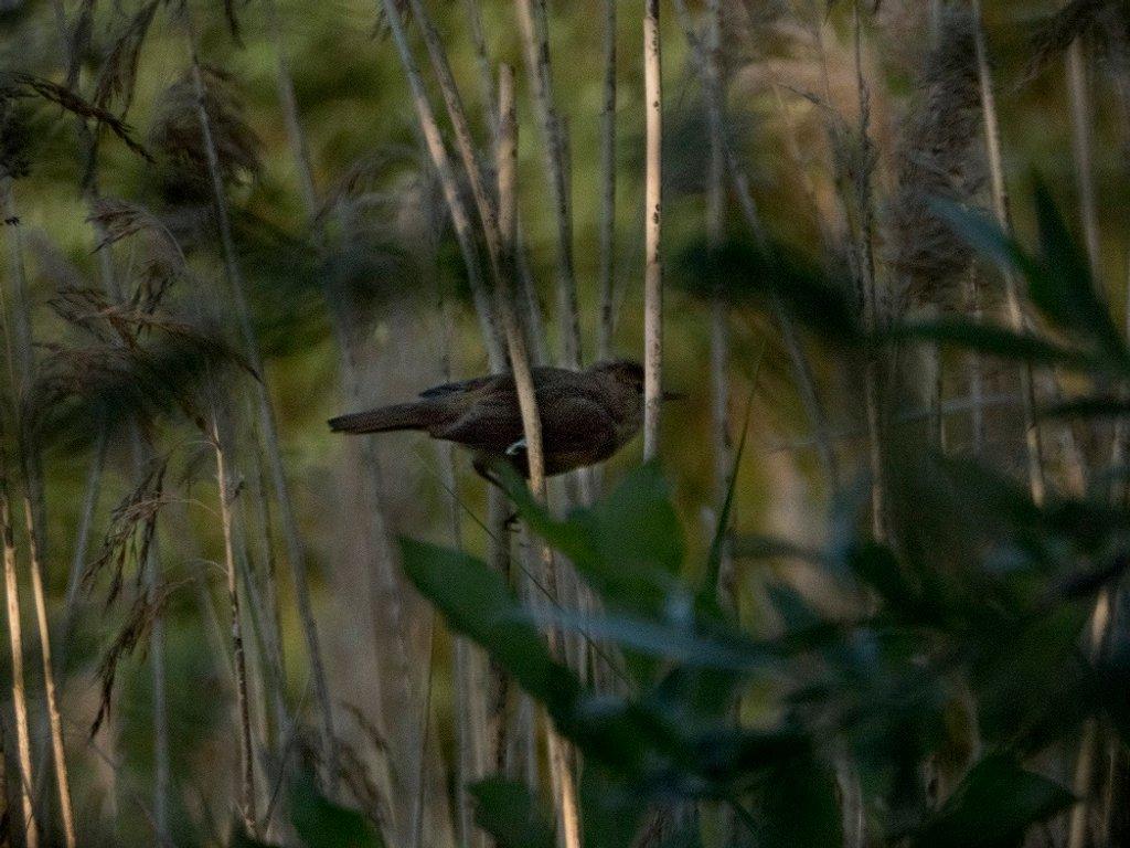 Amongst the reeds .. by helenhall