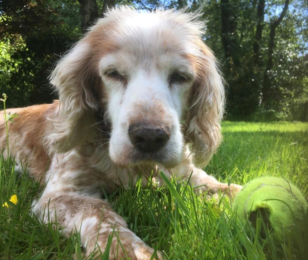 Daisy on a trip to the garden by callymazoo