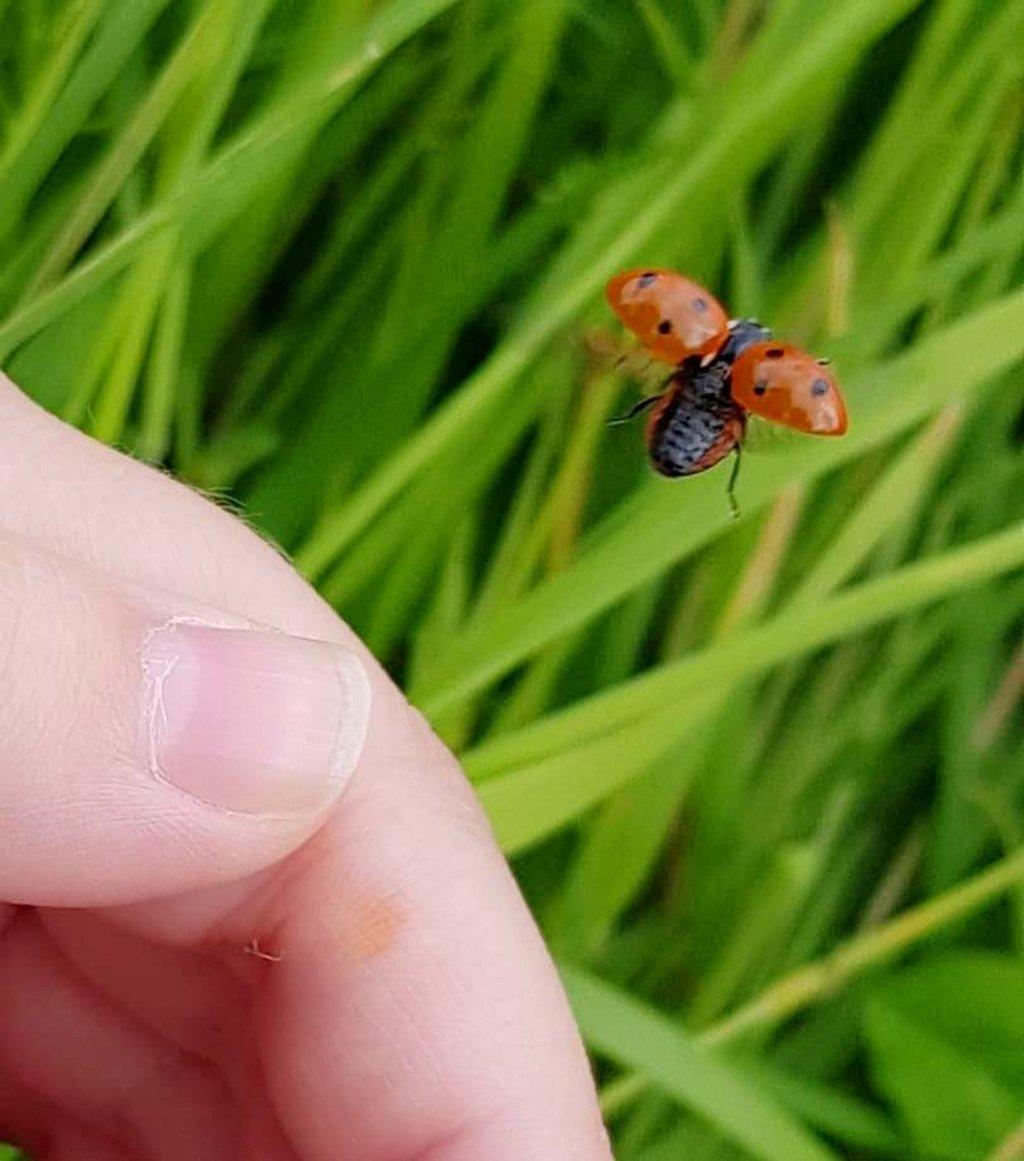 Ladybird in Flight by fishers