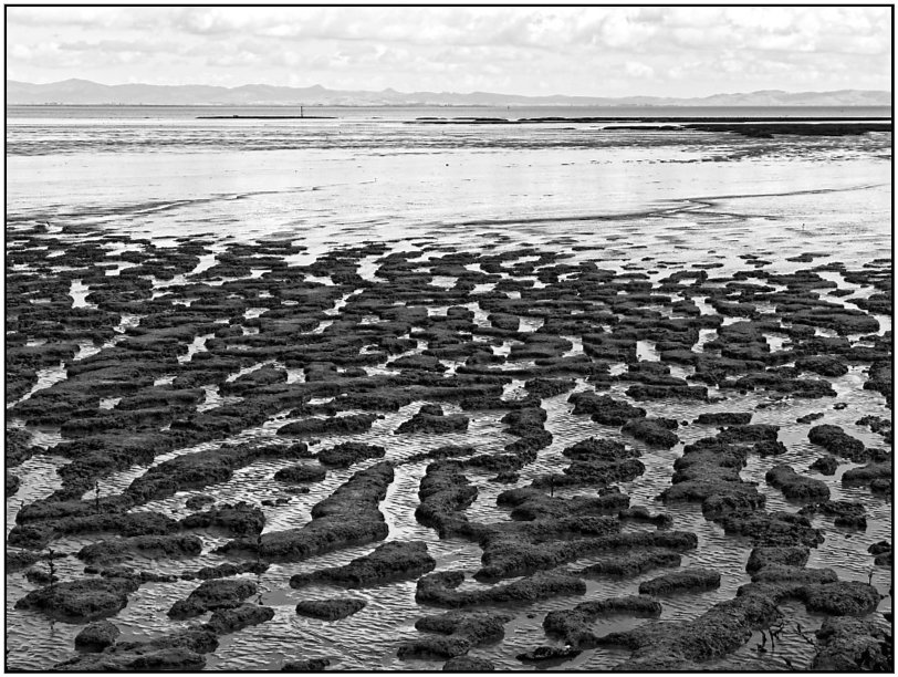 Low Tide, Thames Coast by chikadnz