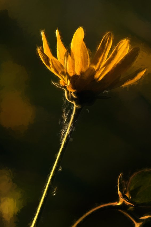 Prairie Flower by lsquared