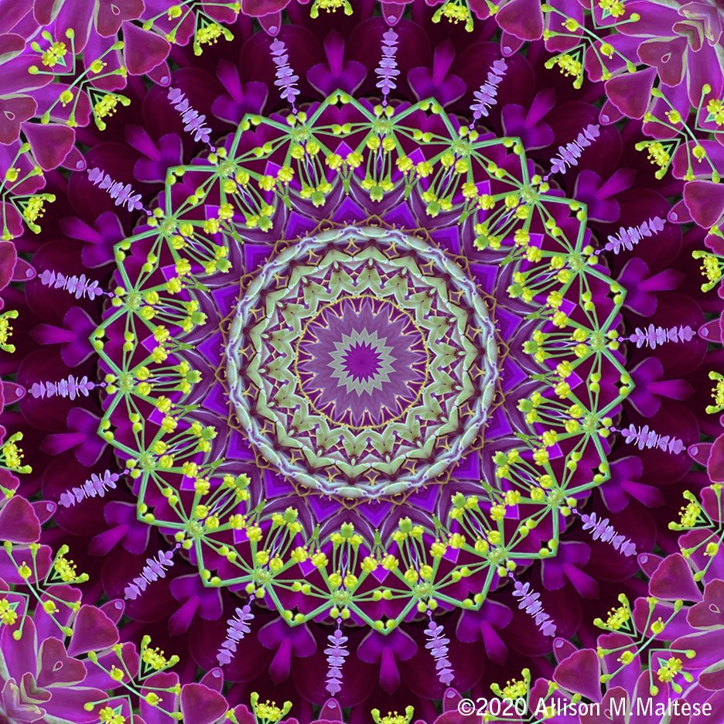 Flower Mandala by falcon11