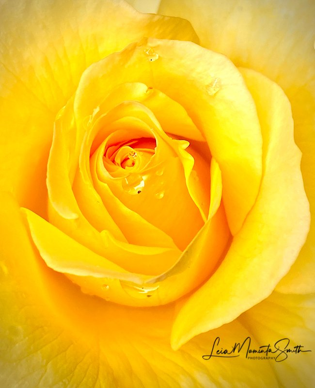 Yellow Love by princessleia