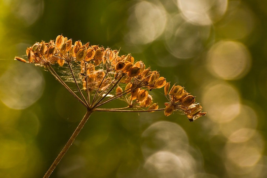 Seed head in the sun  by rjb71