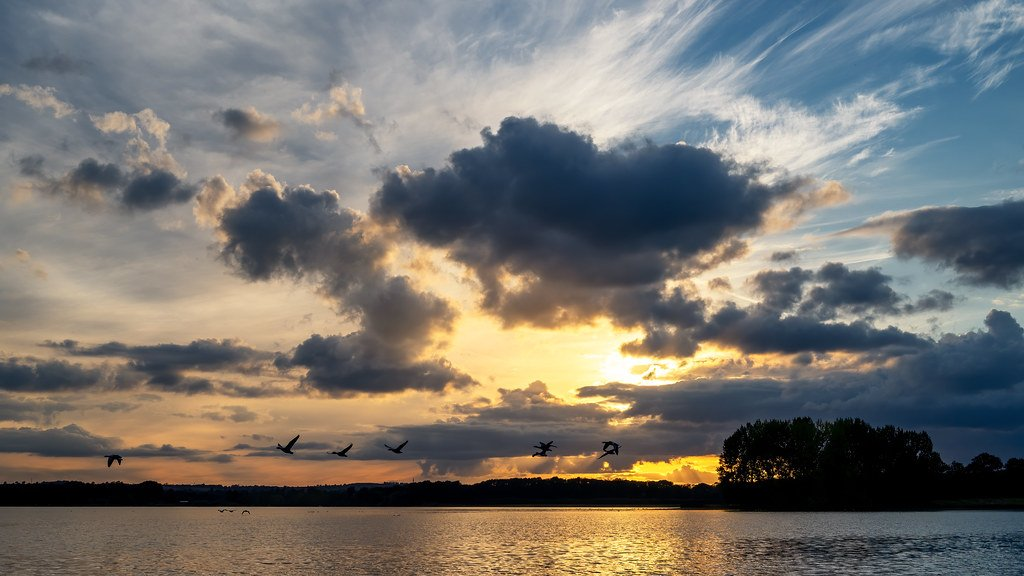 Geese Flyby by rjb71