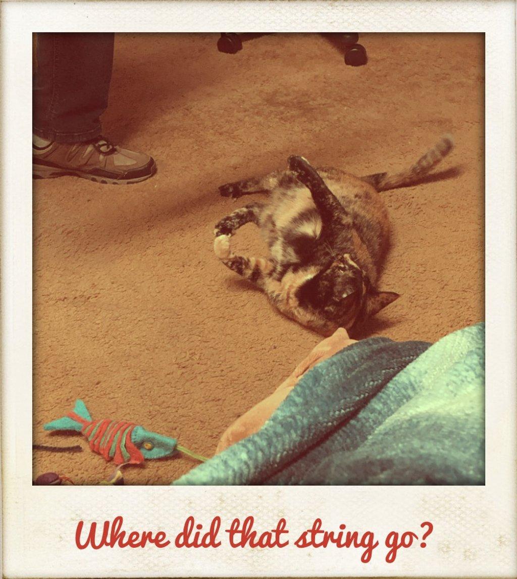 Splotchy playing with string by kathyboyles