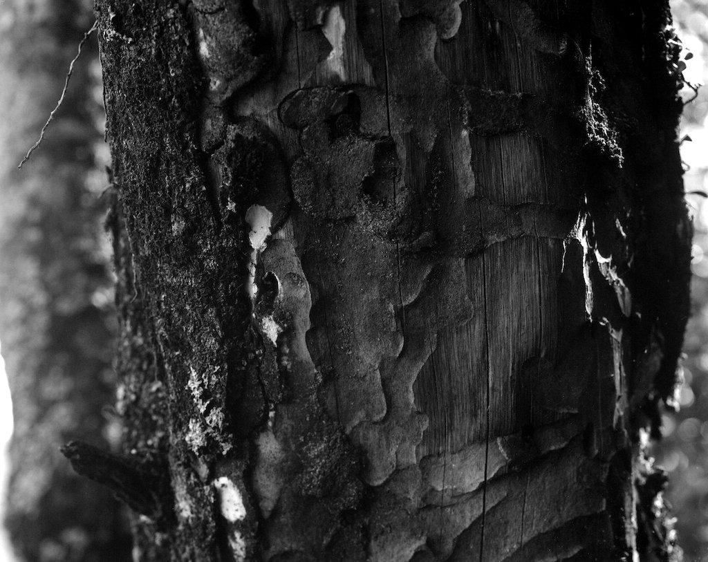 Paths under the bark by peterdegraaff