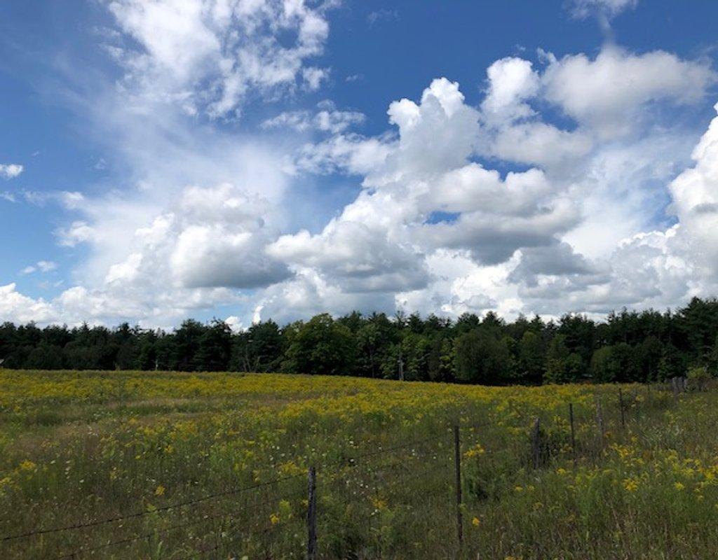 Wild Sky Summer by sunnygreenwood