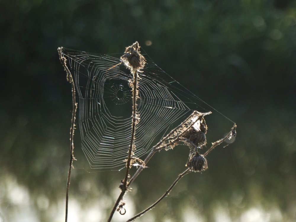 the web by helenhall
