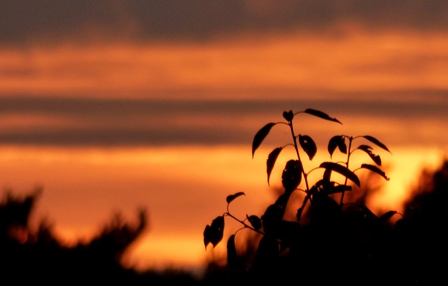 Silhouette at Sunset by fishers