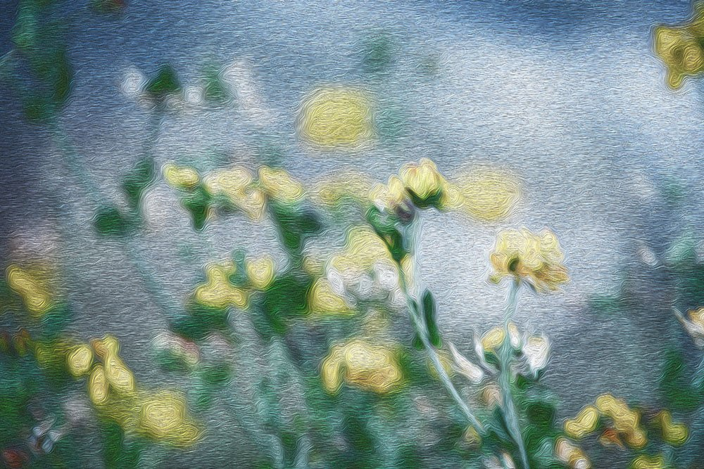 Field of Flowers by kgolab