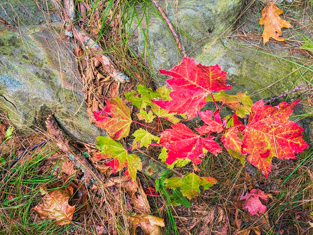 A touch of autumn by joansmor