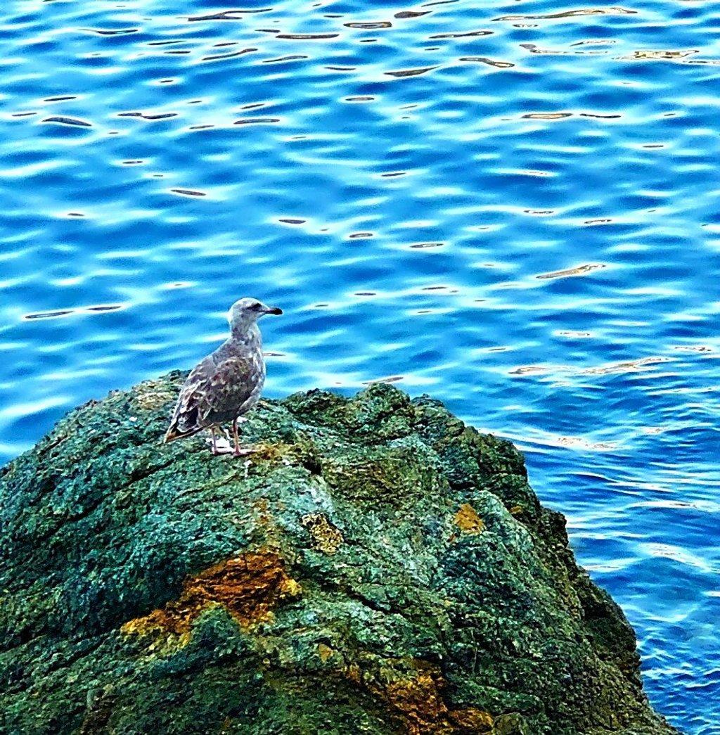 Fly Silly Sea Bird by gardenfolk