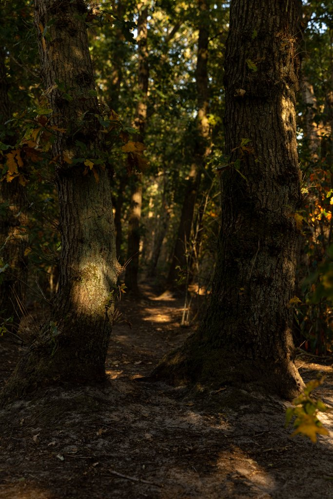 Path and Light in the Forest by leonbuys83