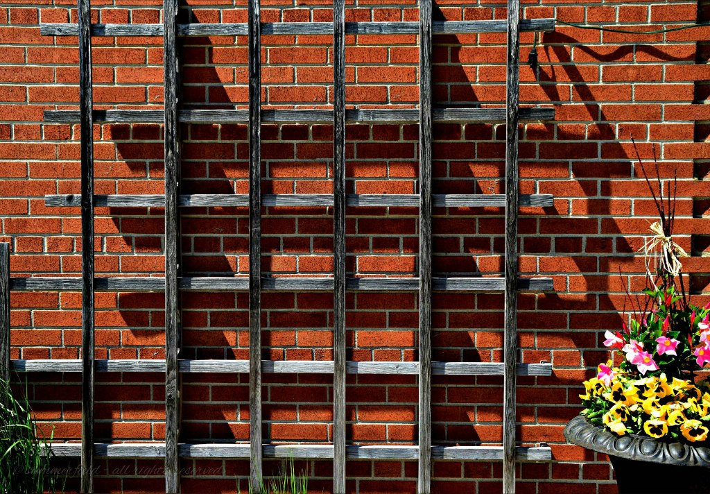 shadows on the wall by summerfield