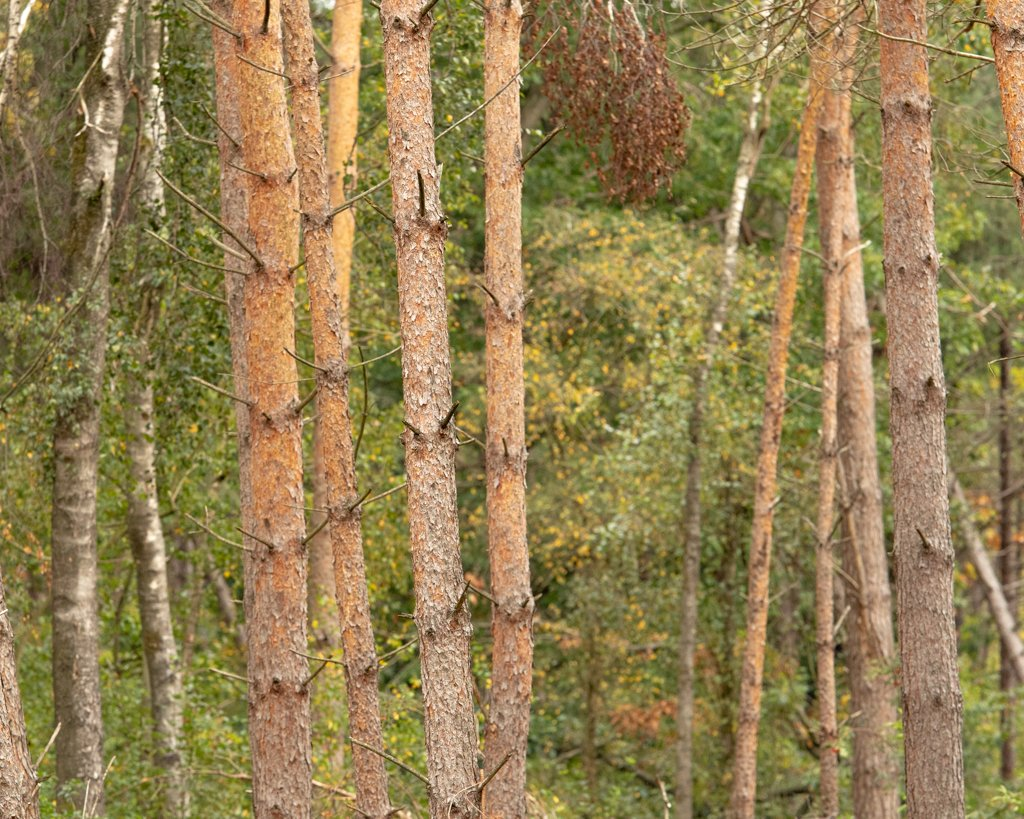 Trees in the forest by leonbuys83