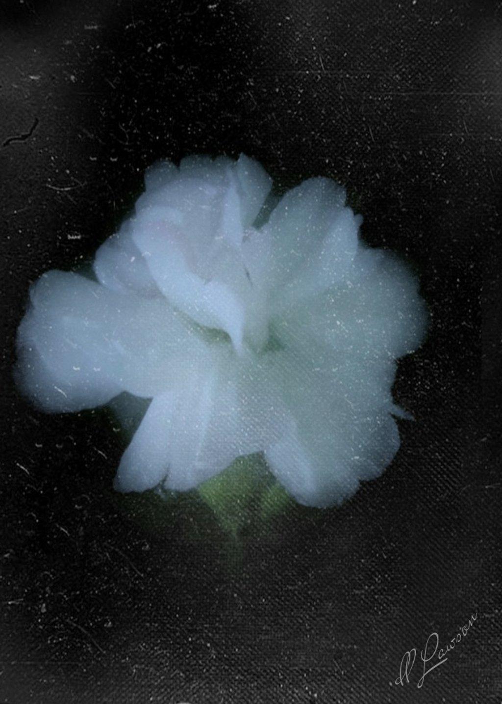 White Flower by flygirl