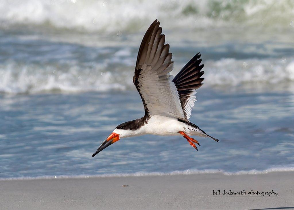 Just love birds in-flight by photographycrazy