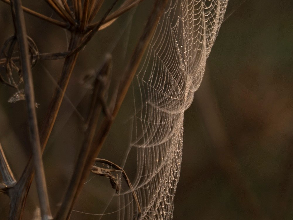 the lure of the web by helenhall