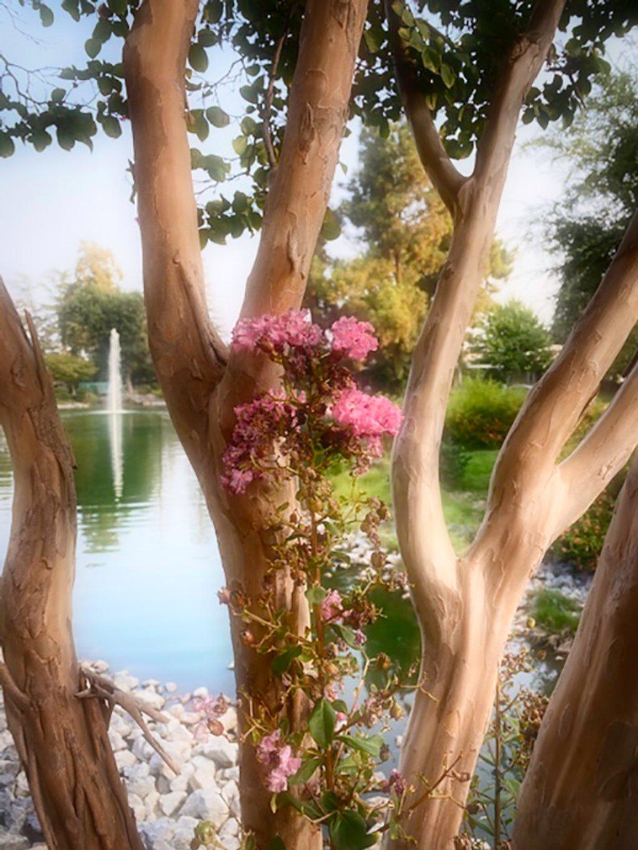 Blossoms by joysfocus