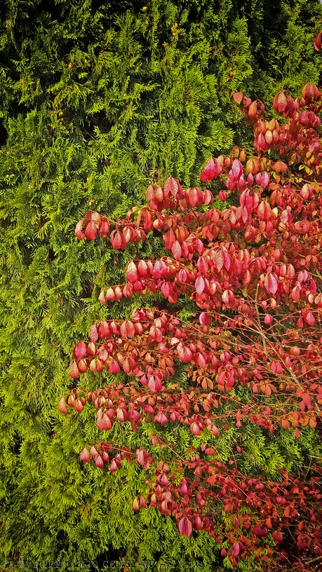 Changing Season - 10 Oct 2020 by byrdlip